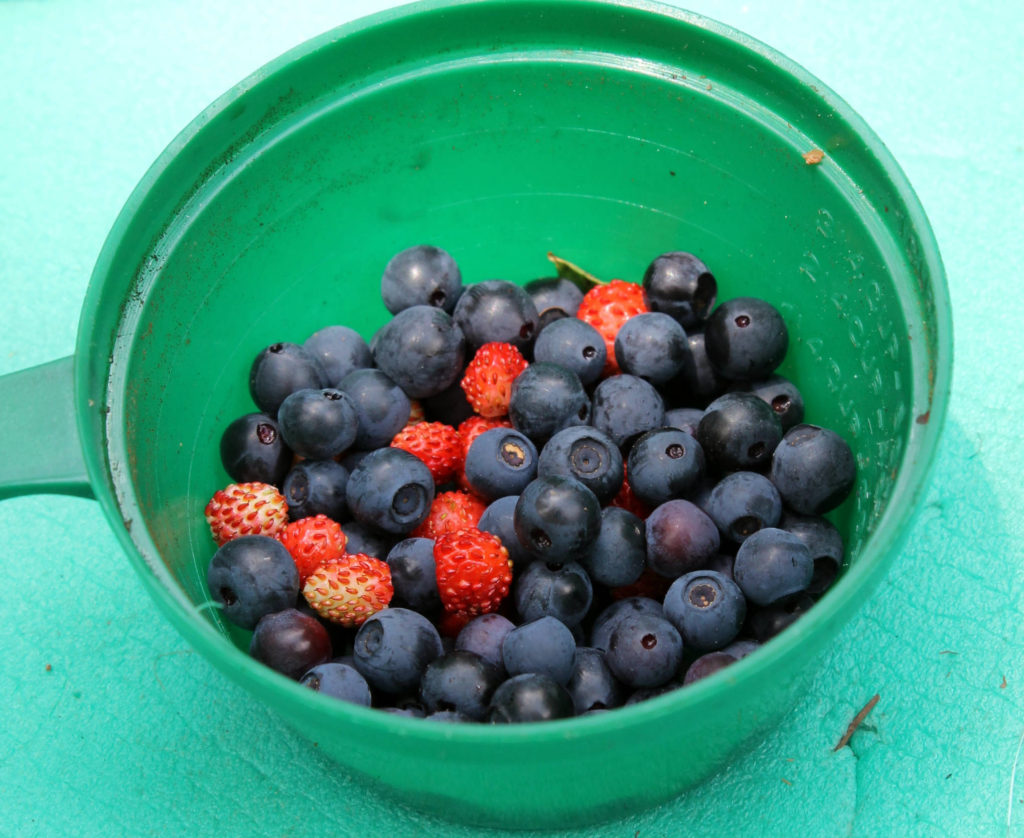 Here are some berries that we foraged near our campsite.
