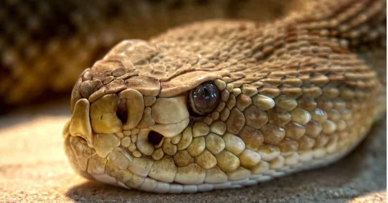 bit by a snake