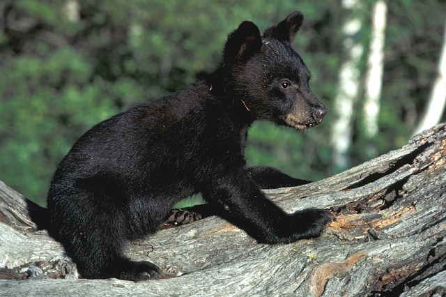 If you see one of these cute guys while hiking, you better get away before mama comes!