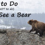 what to do if you see a bear