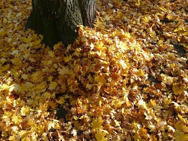 Is there a big pile of dog crap lurking in these leafs? Maybe. Is that going to stop me from jumping in them? Hell no! :)
