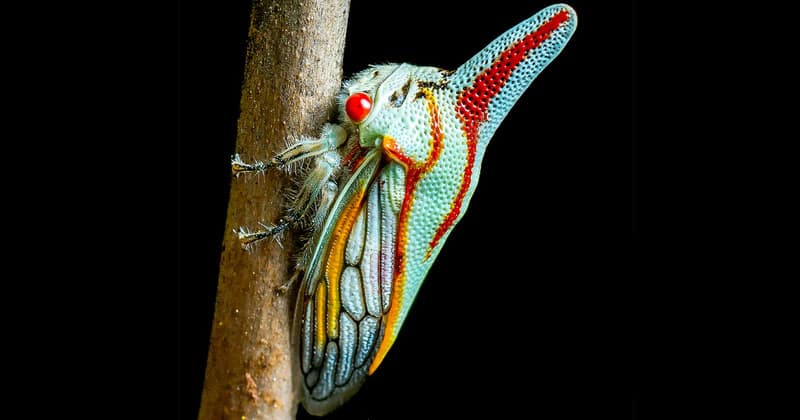 strangely beautiful insects