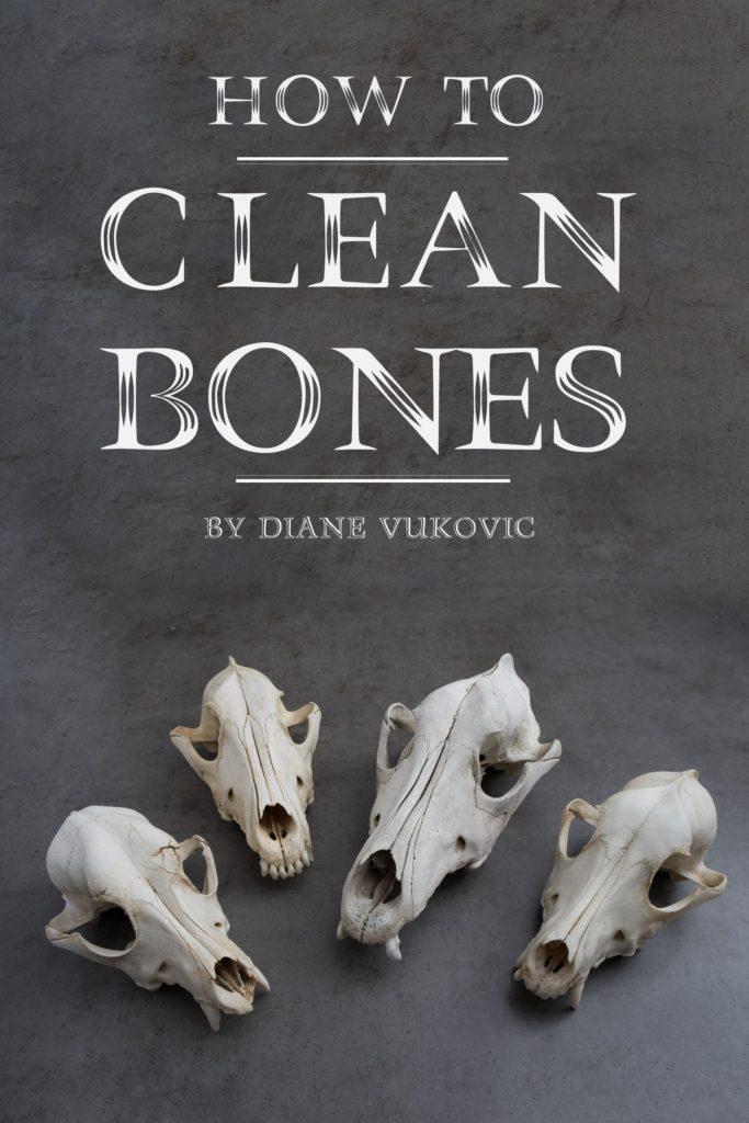 How to Clean Bones