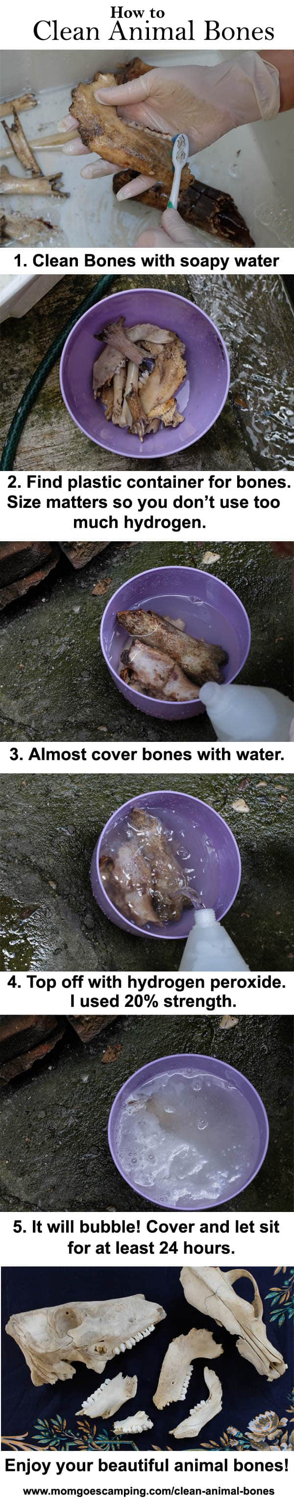 How to clean bones infographic