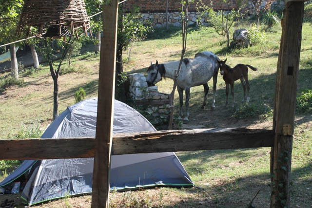 alpike ranch Peja