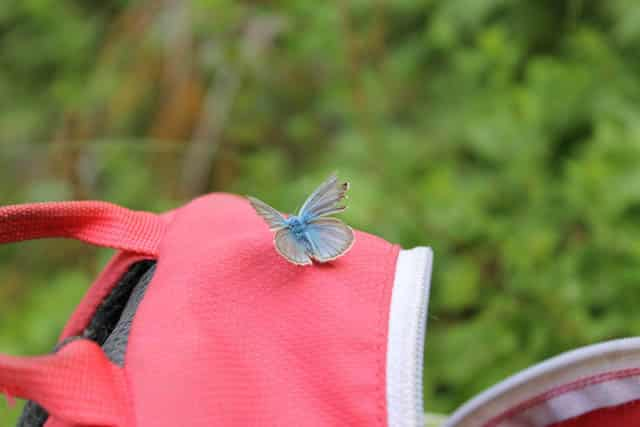 butterfly in Rugova Gorge