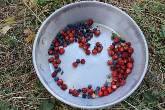 Rugova wild berries