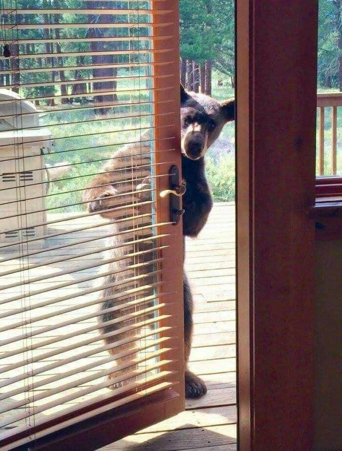 Bears do sometimes come to visit the restaurants! :o