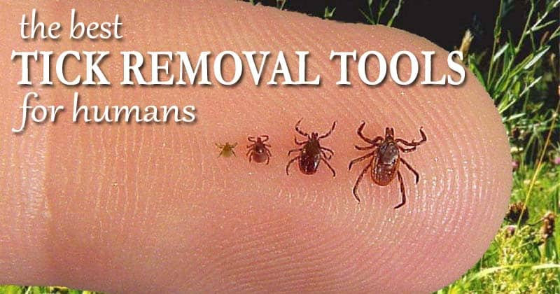 best tick removal tools