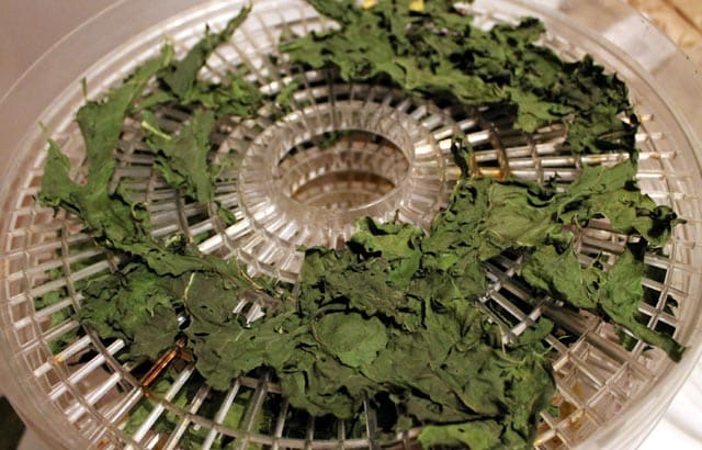 dehydrated kale for backpacking