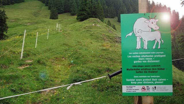 cow danger sign in Switzerland