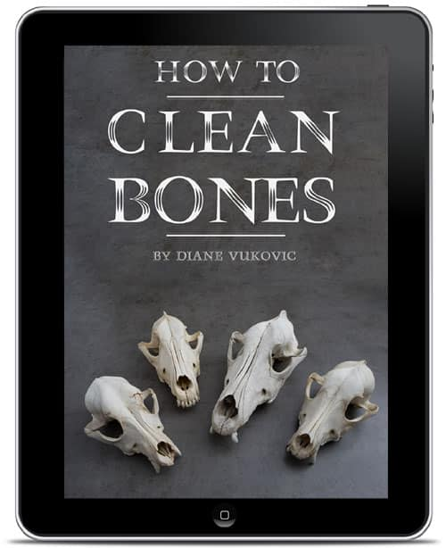 how to clean bones book