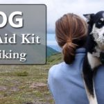 dog first aid kit for hiking