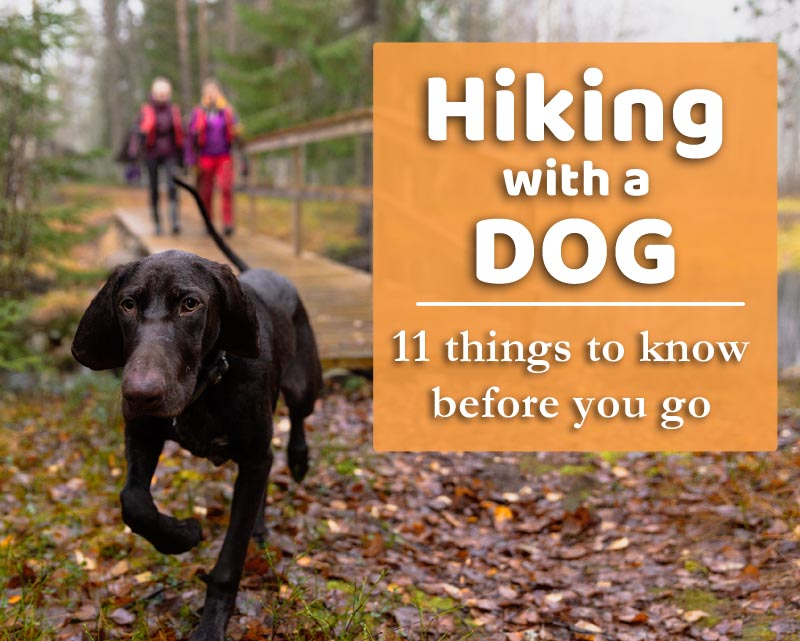 hiking with a dog tips