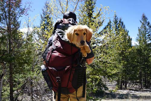 injured dog being carried on a hike