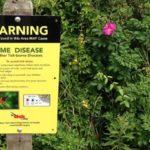 natural tick prevention methods