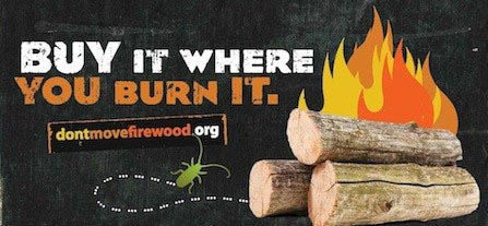 why not bring your own firewood camping