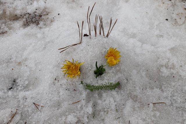 snow nature creature