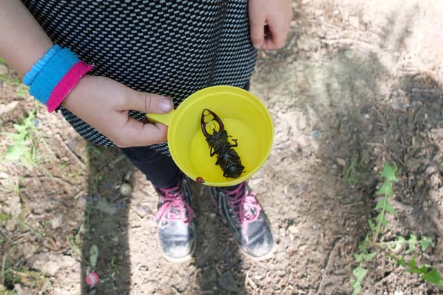 camping activity insect collection