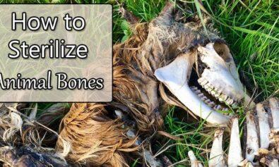 how to sterilize animal bones