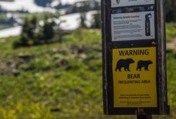 keep bears out of campsite